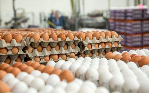 نیازی به واردات تخممرغ از ابتدای سال وجود ندارد