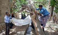 توت تگ کُنی در استان یزد +عکس