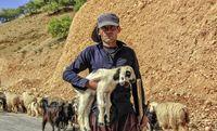 عشایر در جادههای استان چهارمحال و بختیاری +عکس