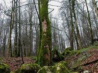 چرا تا ۲۰سال آینده جنگلی در ایران نخواهیم داشت؟