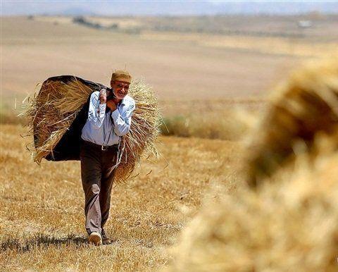 با گندمکاران به روز معامله کنید/ قانون اجرا شود مشکلی نخواهیم داشت