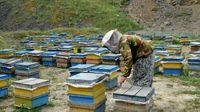 زنبورها تهران را دوست ندارند