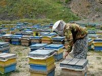 ۲۵۰تعاونی زنبورداری در کشور فعالیت میکنند
