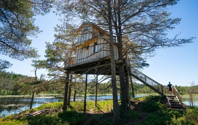 خانه درختی که تبدیل به هتل شد