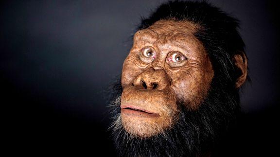 کشف جد 3.8میلیون ساله انسان +عکس