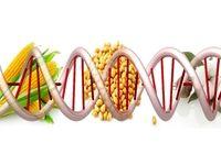 مزایا و معایب غذاهای اصلاح شده ژنتیکی