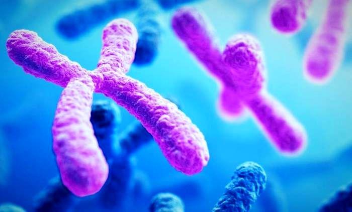 کروموزوم زنان و مردان