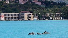 پدیدار شدن دلفینها در تنگه بسفر استانبول +عکس
