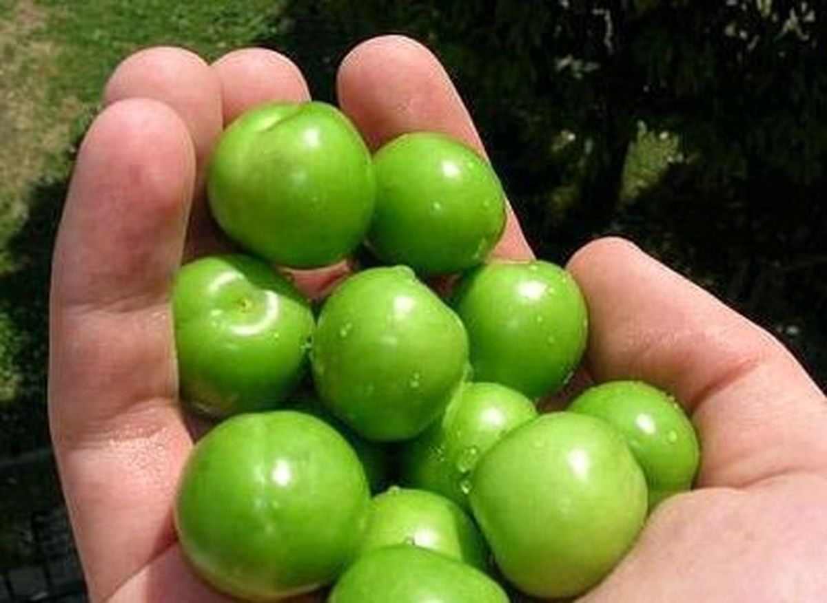 تازهترین قیمت میوههای فصل