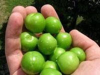 حال و هوای بهاری در بازار میوه