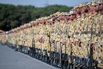 ثبتنام ۱۶۰ هزار نفر برای خرید سربازی