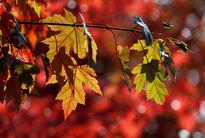 ۸راهکار برای تقویت روحیه در پاییز و زمستان