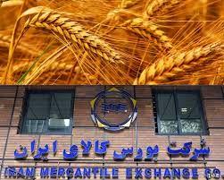 دولت متناسب با نرخ تورم قیمت خرید تضمینی گندم را اعلام کند