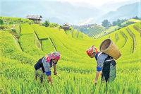 رونق روستاگردی از پنج مسیر