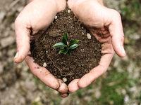 غفلت از خاک مهمترین کاستی در بخش کشاورزی است