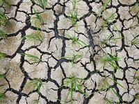 4استان رکورد خشکسالی را زدند