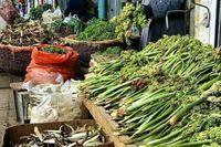 ممنوعیت برداشت گیاهان دارویی و خوراکی در کردستان