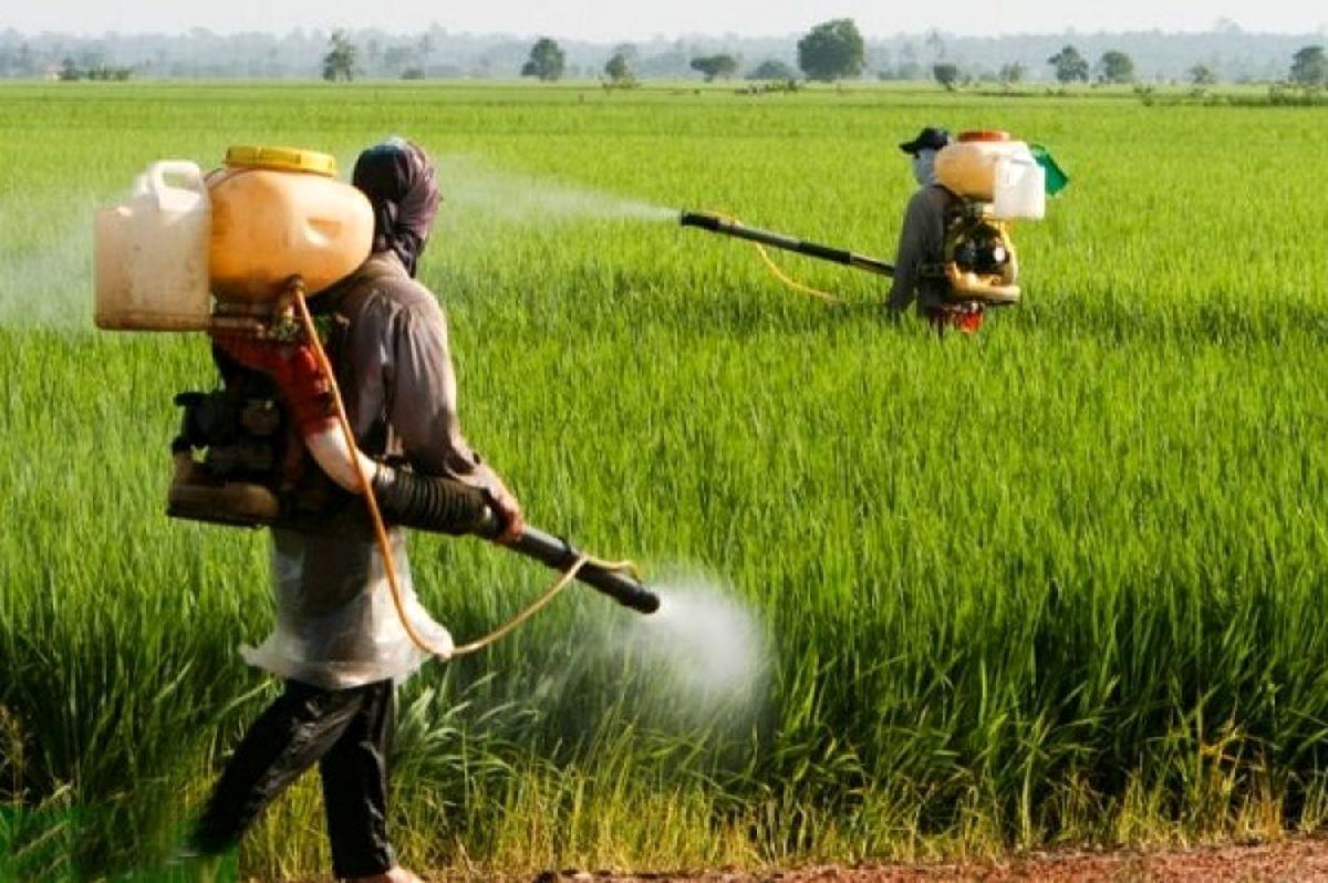 2برابر شدن قیمت نهادهها سم و کود کشاورزی