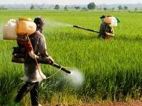 تشریح دلایل گرانی سموم کشاورزی
