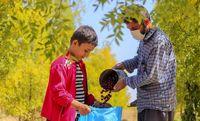 برداشت عناب در خراسان جنوبی +عکس