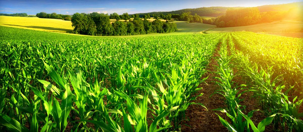 پیشنهادهای هواشناسی به کشاورزان برای اردیبهشتماه