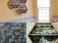 روشی جالب برای تولد عسل در منزل +عکس