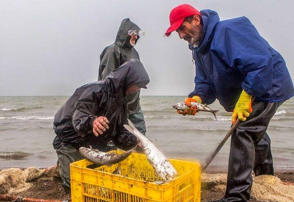 تغییرات قیمت ماهی در ۵سال گذشته