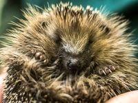 آسیبهای محیط زیستیِ انگلیس پس از ترکِ اتحادیه اروپا