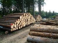 افزایش برداشت قاچاقی چوب از جنگلهای کشور