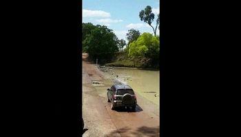 کروکودیلها ،خطرناکترین جاده استرالیا را مسدود کردند +فیلم