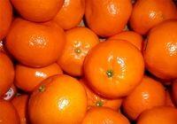 کمبود نارنگی در سه روز گذشته