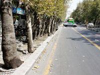 خیابان ولیعصر گوهر تهران است و باید حفظ شود/ انتقاد جدی به کمکاری در حوزه حفظ و صیانت از چنارهای طولانیترین خیابان تهران