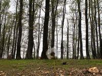 طبیعت خالی از انسان +عکس