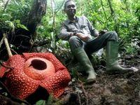 بزرگترین غنچه گل دنیا را ببینید +عکس