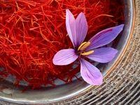 دلالان زعفران را زیر قیمت واقعی میخریدند