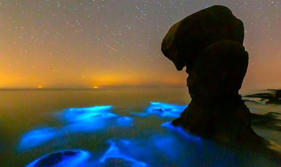 درخشش پلانکتونها در خلیج فارس +تصاویر