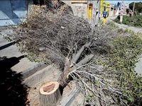 درختان محکوم به مرگ