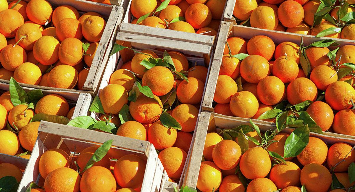 فاصله عجیب قیمت باغ تا بازار پرتقال!