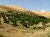 صدور اسناد اراضی طرح آبیاری ۴۶هزار هکتاری در سال ۹۸
