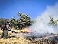 آتشسوزی گسترده در جنگلهای بلوط کردستان +عکس