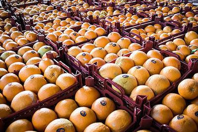 طهماسبی: دروازههای کشور به روی واردات میوه باز بود