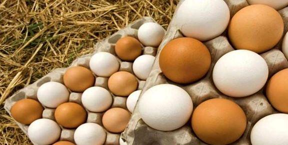 غذاهای پرپروتئین و کم کربوهیدرات را بشناسید