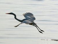 پرندگان مهاجرِ خلیج فارس +عکس