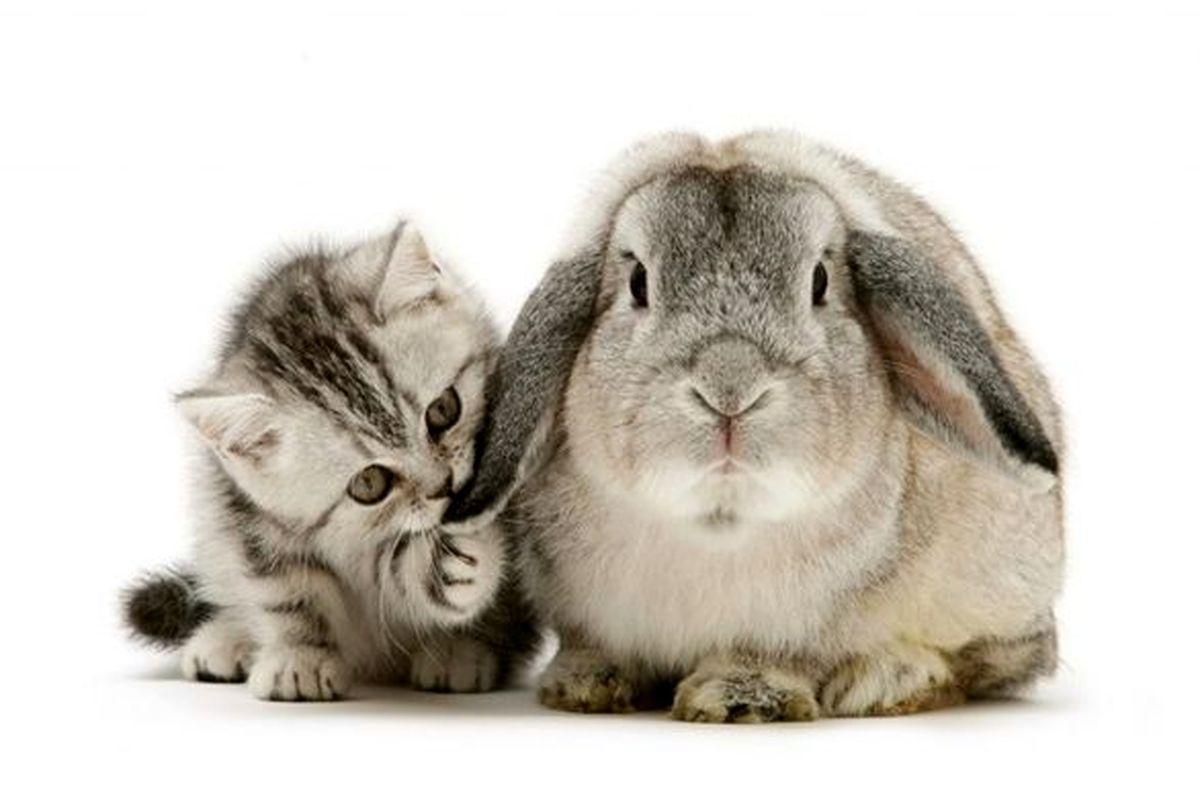 شرکتهای بیمهای فروش بیمه نامه حیوانات خانگی را فراموش کردند؟