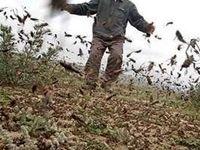 ملخها تهدید جدید اقتصاد جنوب کرمان