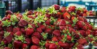 نرخ داغ میوههای نوبرانه