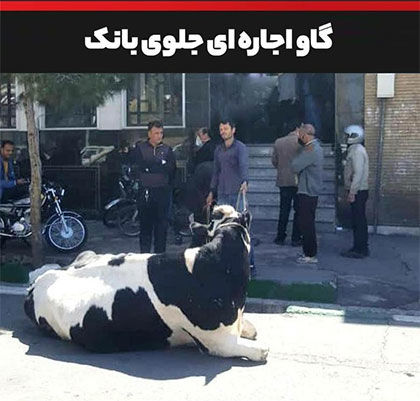 توضیح بانک ملی ایران درباره تقاضای تسویه بدهی با گاو