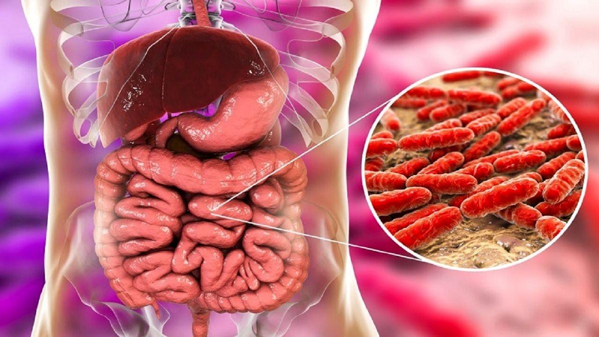 باکتری های مفید برای قلب