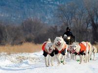 آموزش سگهای سورتمه در آلاسکا +تصاویر