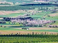 طبیعت بهاری ارومیه +عکس